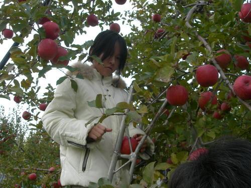 りんご狩りに燃えるりんちゃん