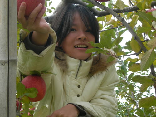 りんちゃんとりんご