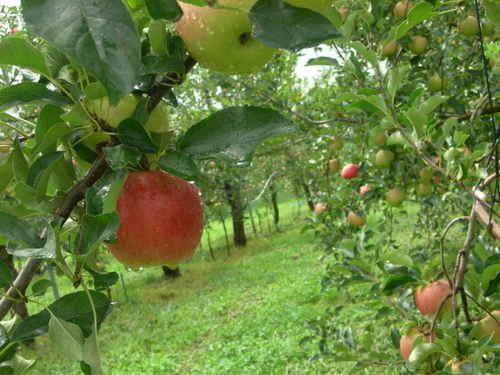 りんごの小径