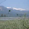 遠くに西駒ヶ岳