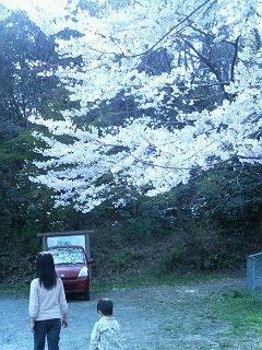 近所でお花見散歩