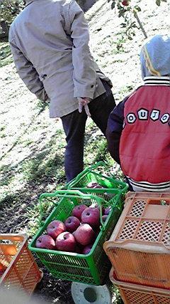 無事に、りんご狩りへ